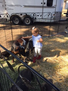 arleigh petting zoo 3