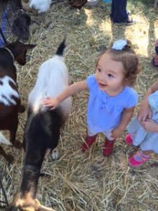 arleigh petting zoo1
