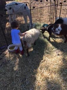 arleigh petting zoo2